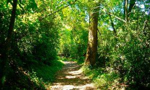 ¿Te imaginas un mundo sin bosques?