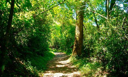 ¿Cuál es la importancia del bosque nativo?