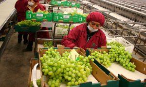 Exportaciones chilenas no cobre alcanzan récord histórico