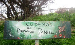 La defensa del bosque Panul
