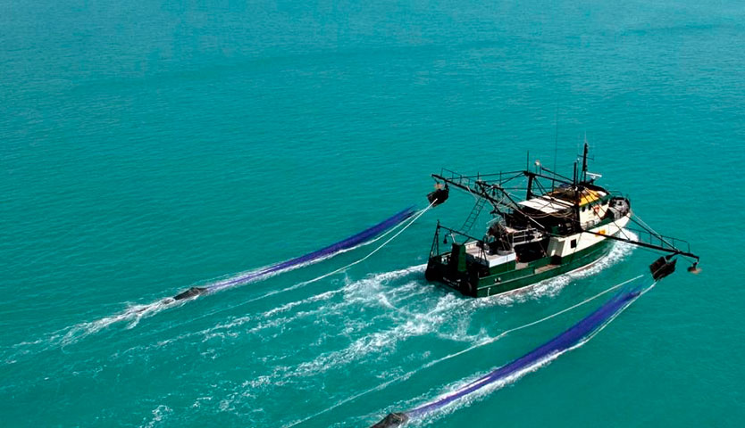 Celebran anuncio de Subpesca de restringir la expansión de la pesca de arrastre