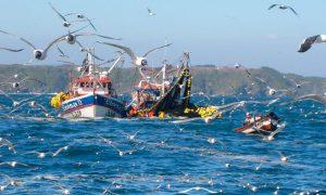 El cambio climático amenaza la corriente de Humboldt