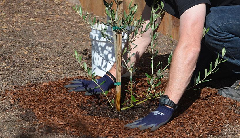¿Cómo elegir el árbol más apropiado para plantar en mi casa?