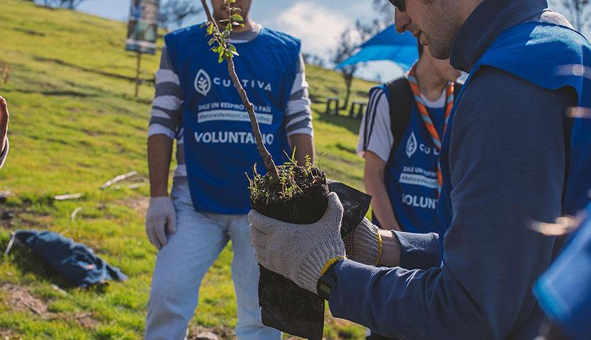 Reforestan Cerro Colorado de Renca con 330 árboles nativos