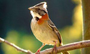 Nueva aplicación móvil y portal web para aprender sobre aves