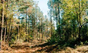 Una simple acción por los bosques al alcance de tu mano