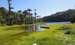 Presupuesto 2019 para áreas protegidas disminuye en 13,3%