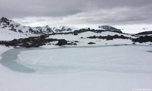 Copépodos revelan secretos de la Antártica y Patagonia