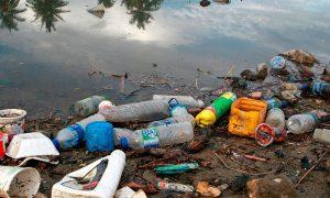 Hongos: ¿un arma para acabar con los plásticos?