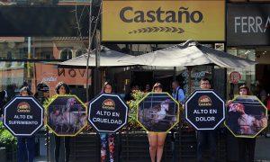 Activistas piden fin de maltrato animal en la industria del huevo