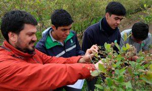 Proyecto busca optimizar uso hídrico y energético en producción de arándanos