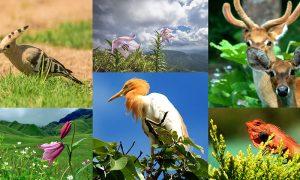 Iniciativa busca secuenciar genéticamente toda la vida del planeta