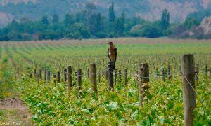 Premian a iniciativa chilena por promover conservación de la naturaleza en viñas