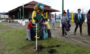Conaf entregó más de 745 mil árboles para proyectos de arborización urbanos o periurbanos