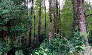 Fondos concursables para el manejo y conservación del bosque nativo