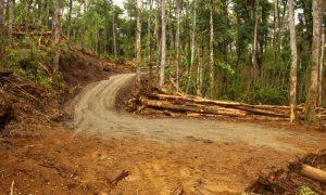 Municipalidad de Pucón denuncia y frena tala indiscriminada de árboles nativos