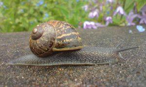 ¿Por qué son tan valiosos los caracoles?