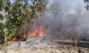 Brigadistas de Conaf combaten incendio forestal de Melipilla